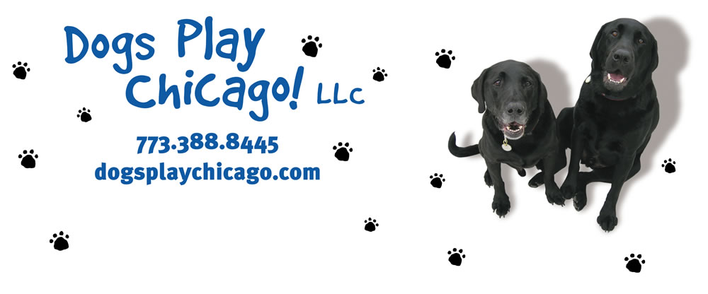 Van Decal Art for Dog Service
